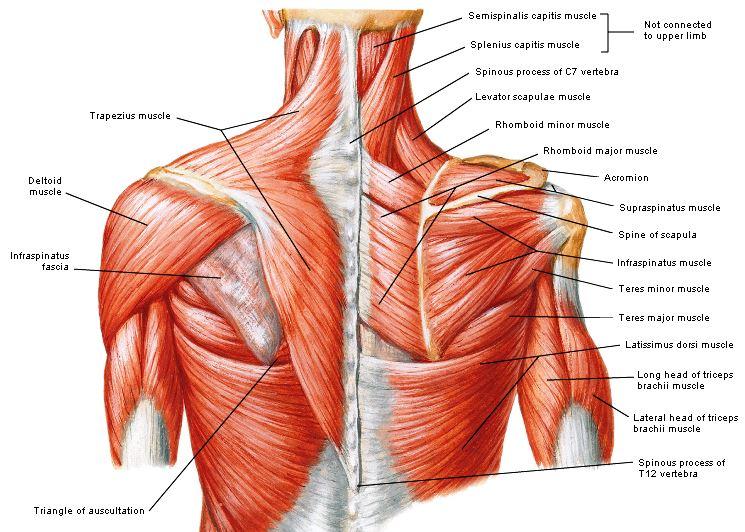 alle spieren trainen