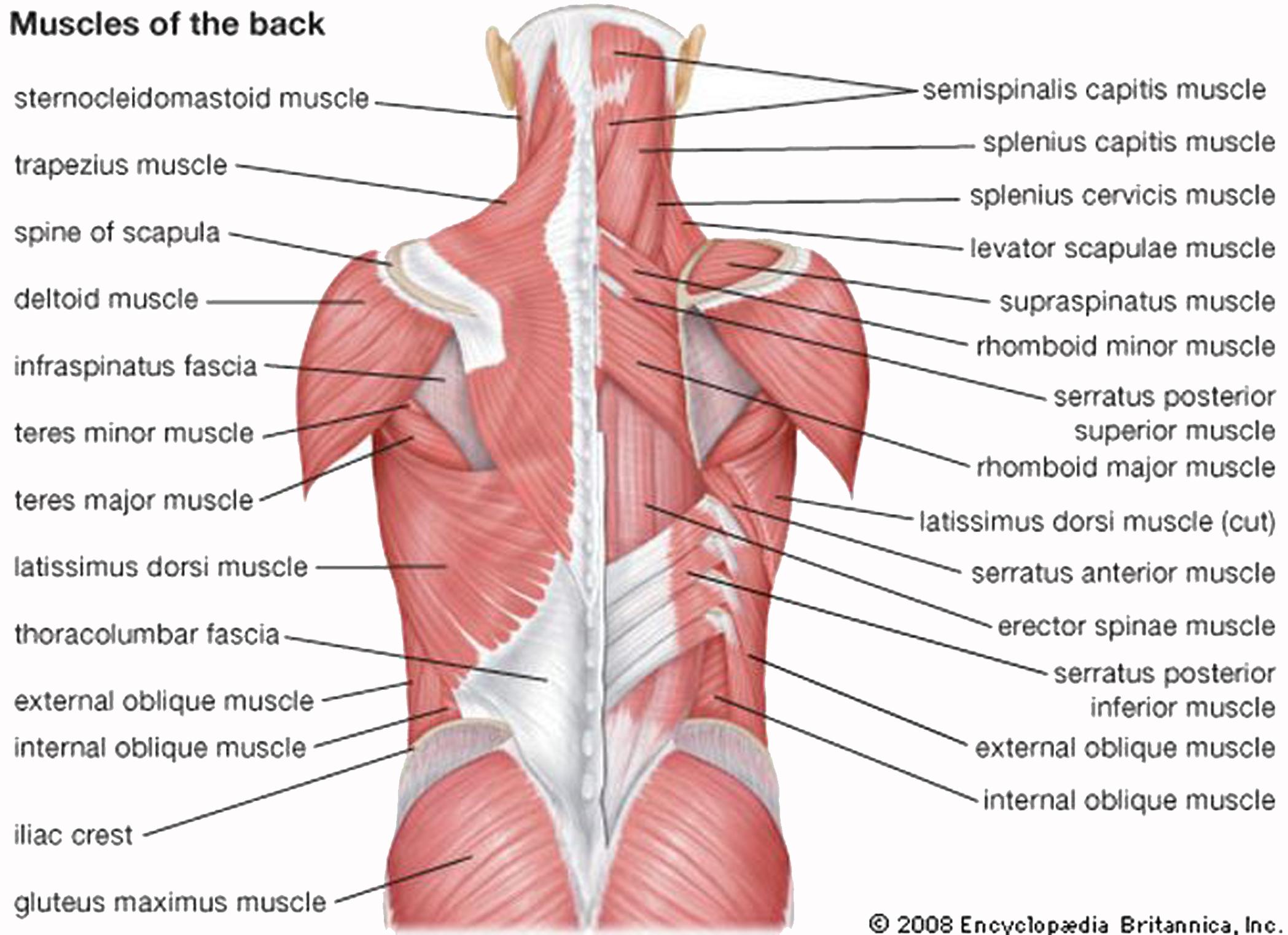 rugpijn rechterkant midden