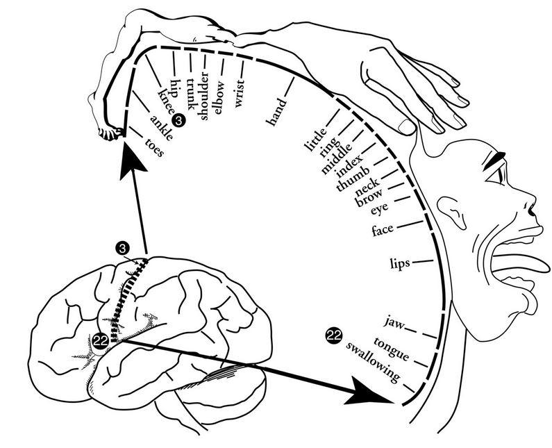 Onze handen en hersenen: teamwork | Simmerblau